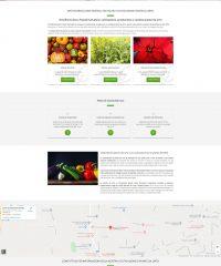 Ortofloricola F.lli Salvalaio – Coltivazione piante da orto