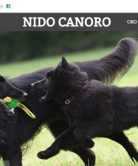 Nido Canoro – Negozio per animali